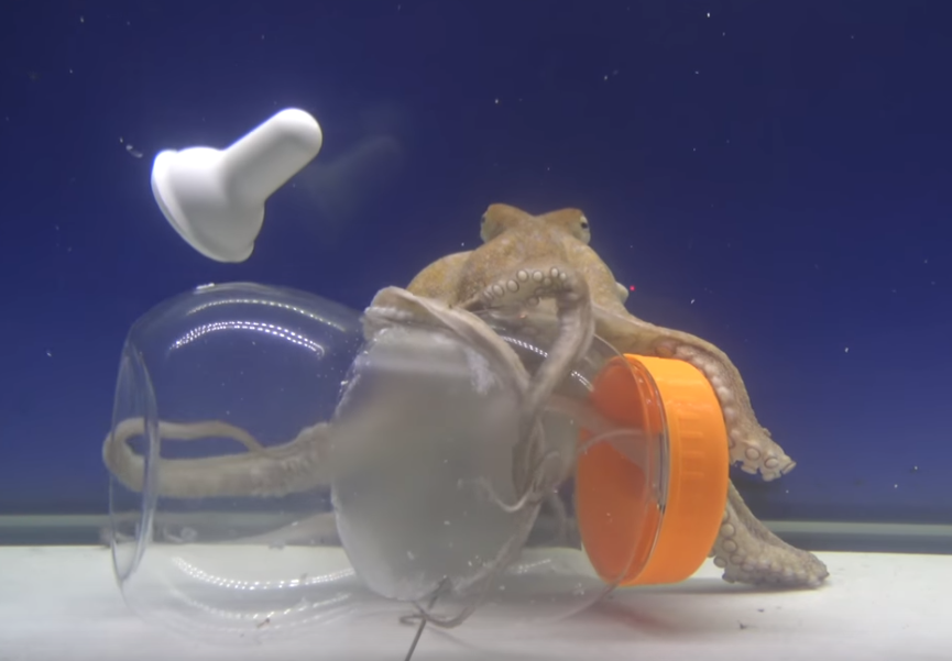 A still from the video. The bottle is transparent plastic and the octopus, about the same size, is behind it, with its arms wrapped around various parts of the bottle, looking at us.  The orange screw cap that secures the nipple in place is still screwed to the top of the bottle, but the white rubber nipple itself is floating away. One of the octopus's arms is inside the bottle, entering through the large hole previously blocked by the nipple.